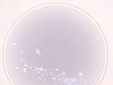 Night Snow Sakura