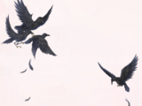 Fluttering Crows