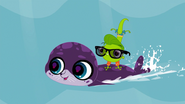 Vinnie surfing on a seal