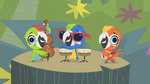 Macaw Jazz Trio