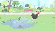 Ostrich out of pond
