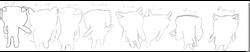 Popular Sketch