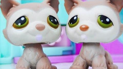 LPS WHATS IT LIKE BEING A TWIN?