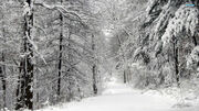 Snowy-road-in-the-forest-14710-1920x1080