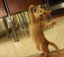 Pewien Loth-kot