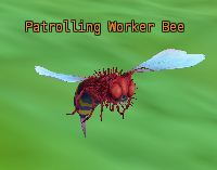 Patrolling worker bee