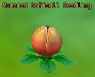 Mutated Daffodil Seedling