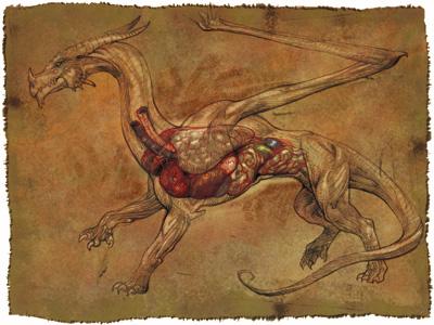 Dragon Internal