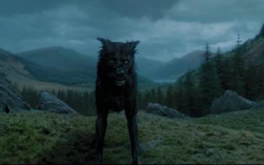 Serius Potter as Dog