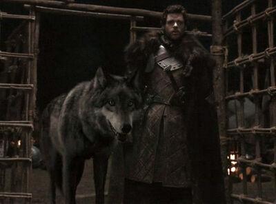 Robb Starke Greywind Gif