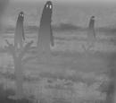 Docile Grey Giants