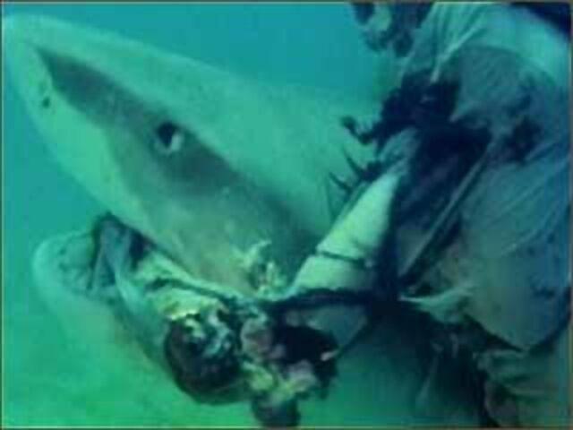 File:Zombie shark2 converted.jpg