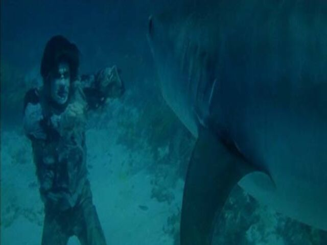 File:Zombie-shark1 converted.jpg