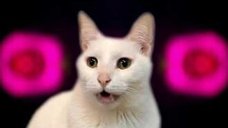 Chicken Dance - Cats Version - Singing Cats - Cats Parody