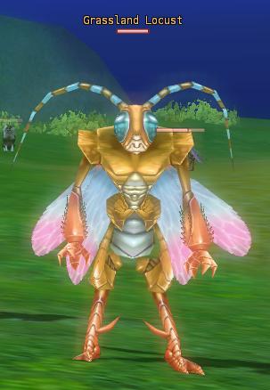 3-Grassland Locust