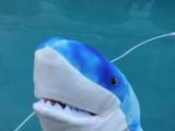Burrito Shark