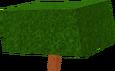 WalnutSapling