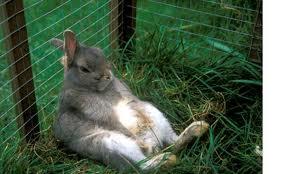 image bunny jpeg lumber tycoon 2 wikia fandom powered by wikia