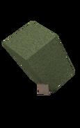 Acacia sapling