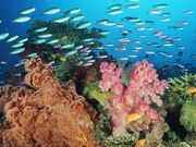 Reef-life-pixels-tagged-coral-sea-underwater-556423