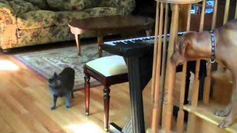 Karate Cat Gets Dog!