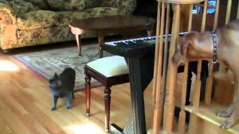 Karate Cat Gets Dog