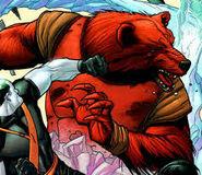Grizzly Czerwony