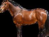 Лошадь (существо)