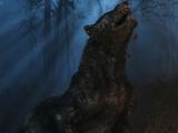 Волк (существо)