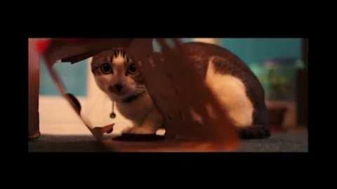 2013 極拍48‧Rush48 - 人形貓公 Cation