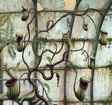 Flytrap plant