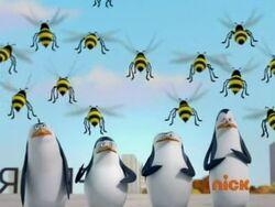 Pinguine hornissen
