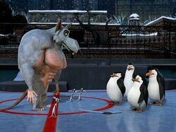 Pinguine ratten eishockey