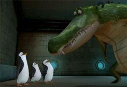 Pinguine beraten roger