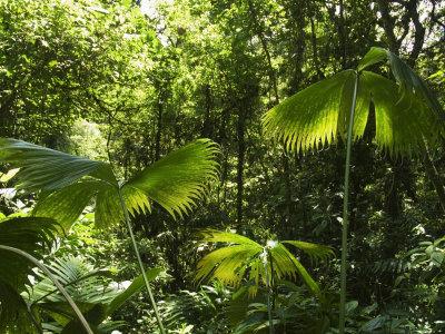 File:TropicalRainforestBiome1.jpg