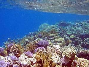 File:Corals 1 263308.jpg