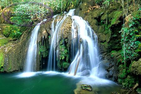 File:Rainforest-31.jpg