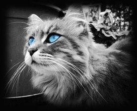 Water eyes by BlackStarshine13