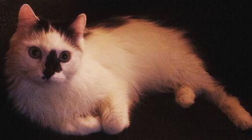 Kot Tadeusz