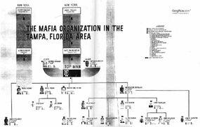Tampa chart