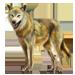 Item himalayanwolf 01