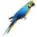 Item golden parrot 01