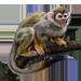 Item squirrelmonkey 01