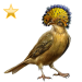 Item atlanticroyalflycatcher gold 01