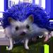 Item bluehedgehog 01