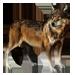 Item whitesockswolf 01