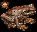 Natal Forest Frog