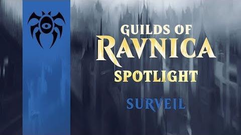 Guilds of Ravnica Spotlight Surveil
