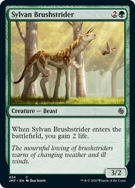 Sylvan Brushstrider