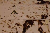 SlitScan-Microscope